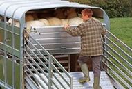 easy-load-sheep-deck